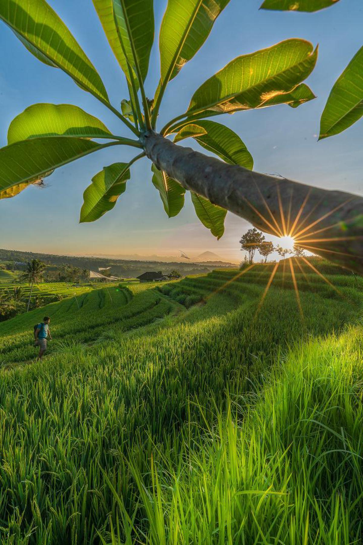 Image of Nature, Green, Leaf, Tree, Plant, Sky etc.