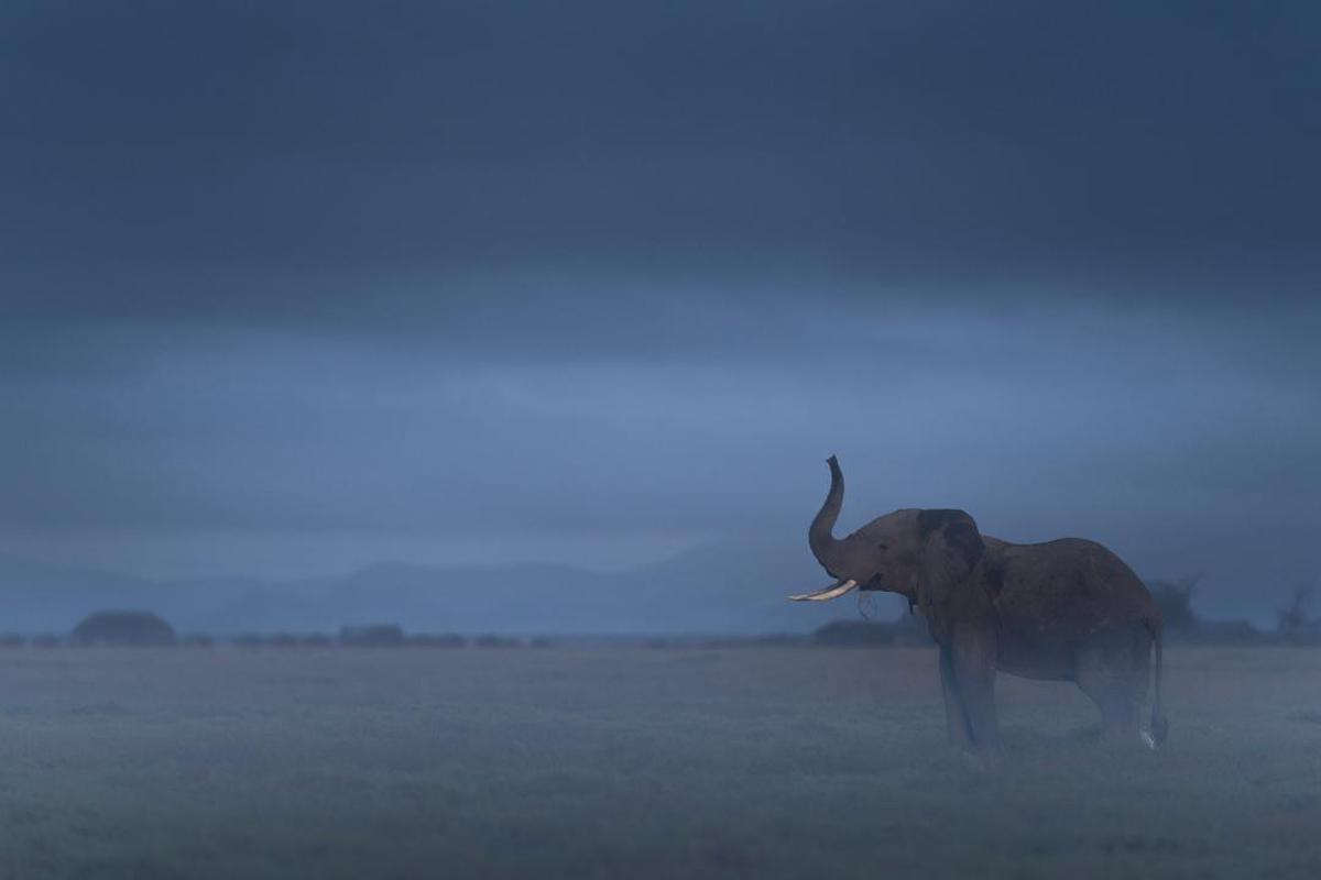 Image of Wildlife, Sky, Atmospheric phenomenon, Elephant etc.