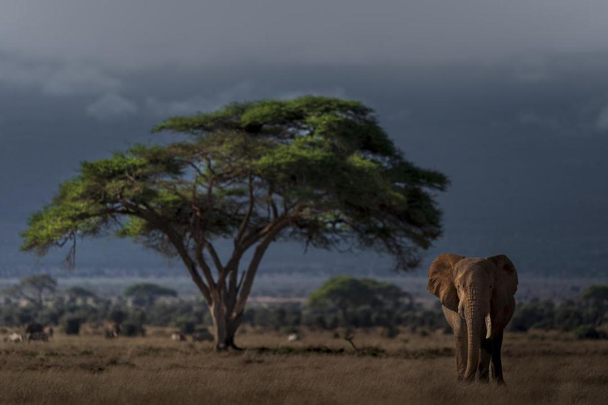 Image of Wildlife, Terrestrial animal, Savanna, Tree, Natural landscape, Safari etc.