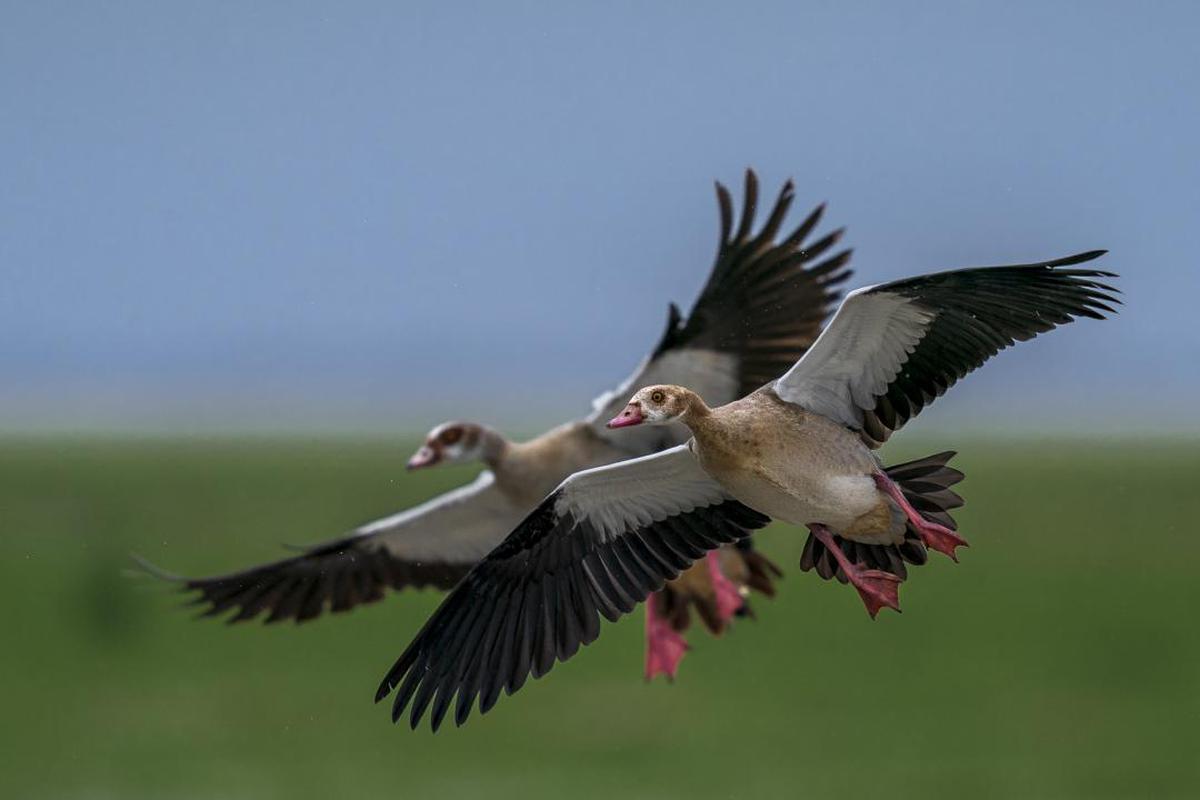 Image of Bird, Vertebrate, Beak, Wing etc.