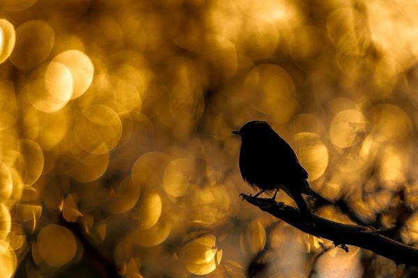 Image of Bird, Branch, Beak, Twig, Sky, Blackbird etc.