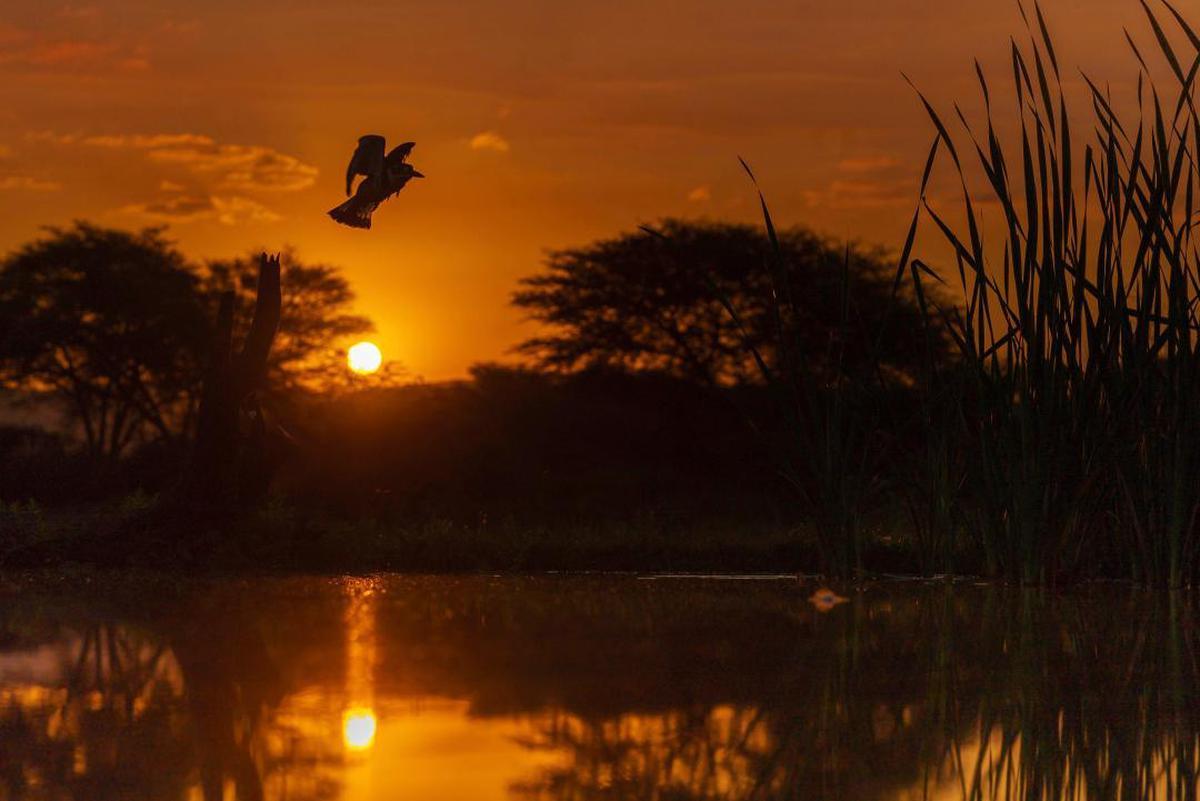 Image of Sky, Nature, Sunset, Sun, Sunrise, Reflection etc.