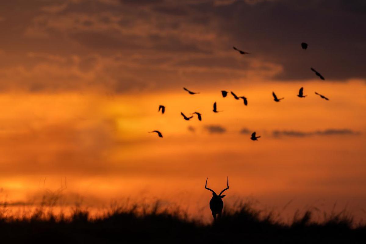 Image of Sky, Flock, Bird migration, Bird, Animal migration, Morning etc.
