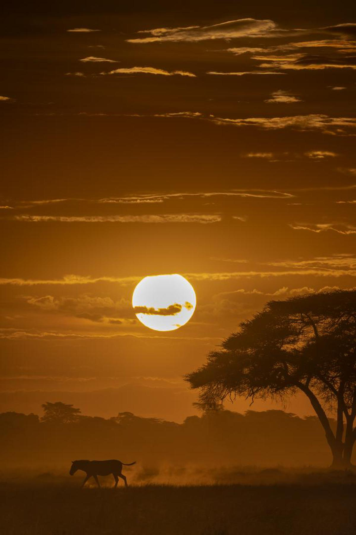 Image of Sky, Sunrise, Sunset, Cloud, Horizon, Atmospheric phenomenon etc.