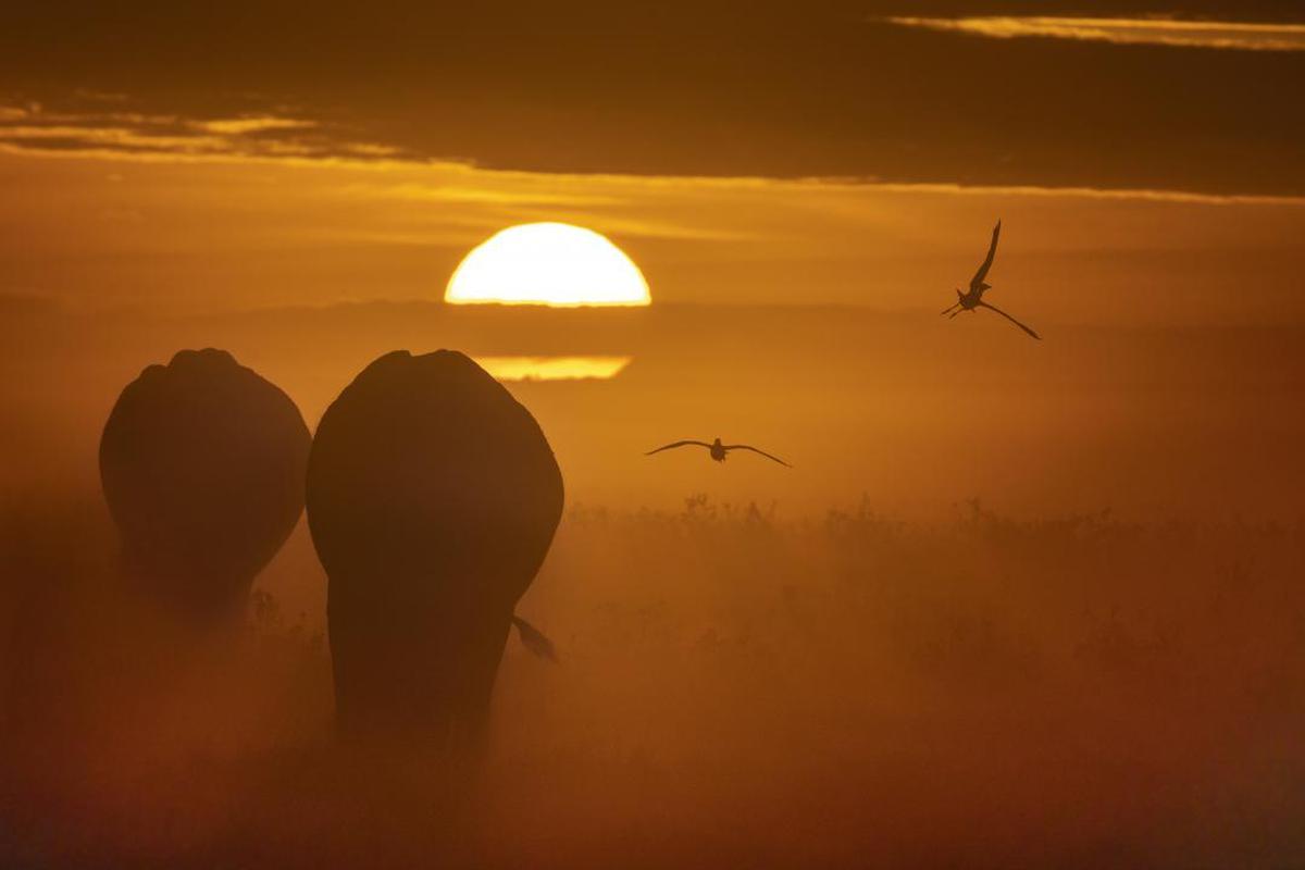 Image of Sky, Sunrise, Atmospheric phenomenon, Sunset, Morning, Sun etc.