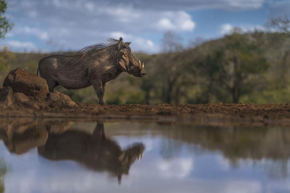 Image of Wildlife, Reflection, Sky, Bank, Water etc.