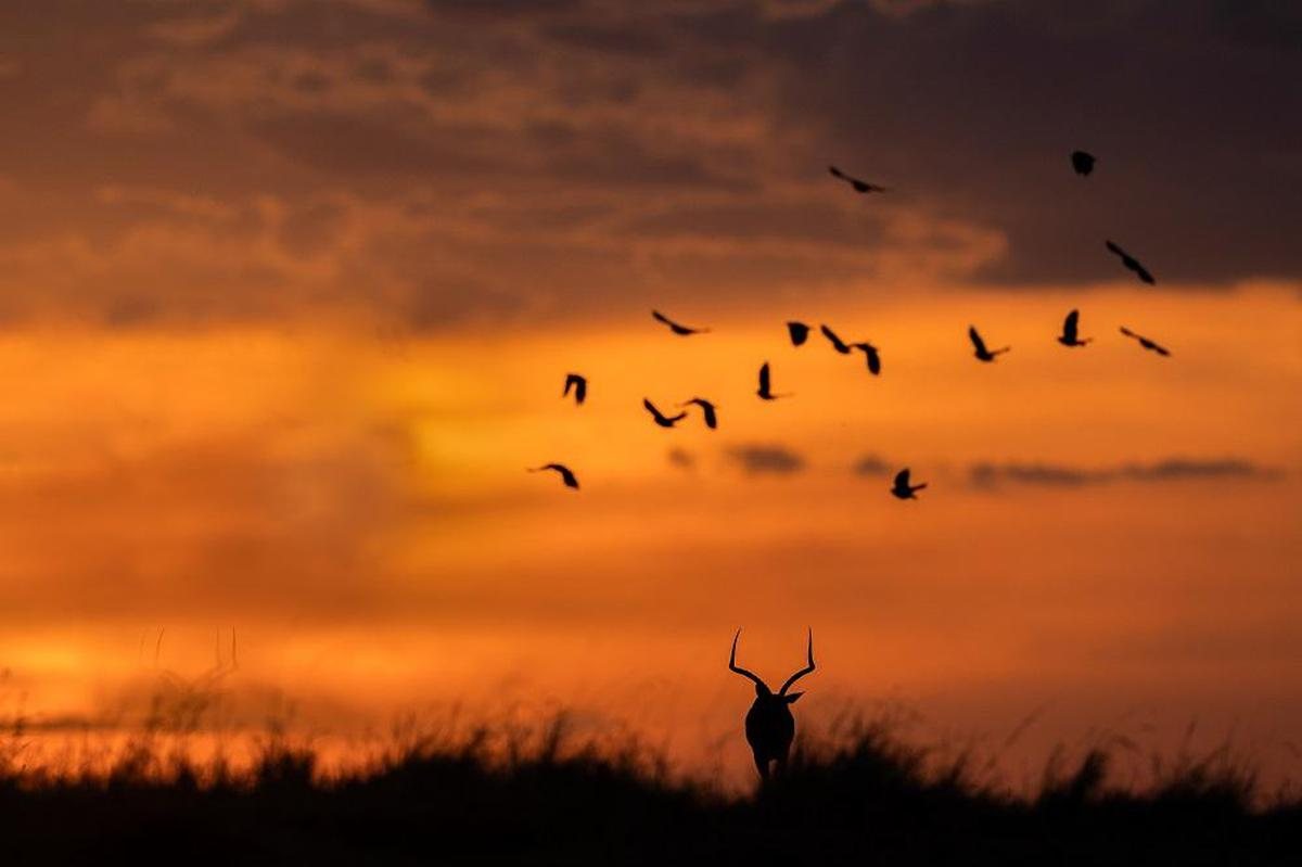Image of Sky, Flock, Bird migration, Bird, Animal migration, Natural landscape etc.