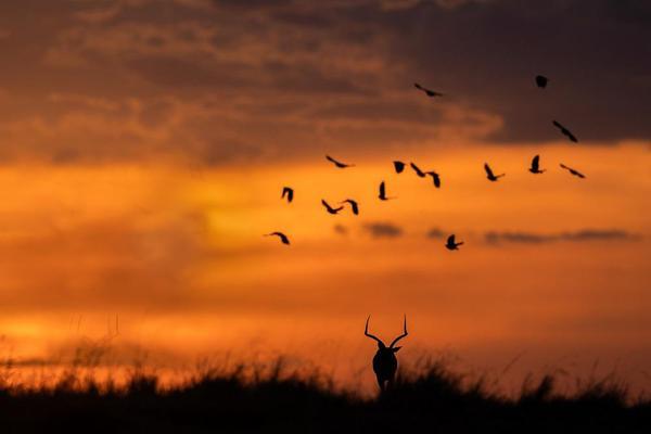 Image of Sky, Flock, Bird migration, Bird, Animal migration, Natural landscape etc.