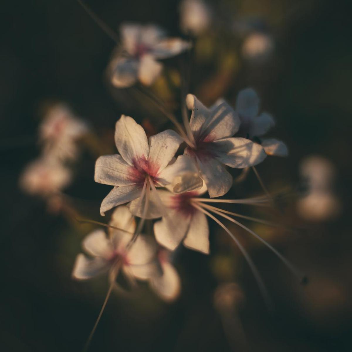Image of Flower, Plant, Pink, Petal, Spring etc.