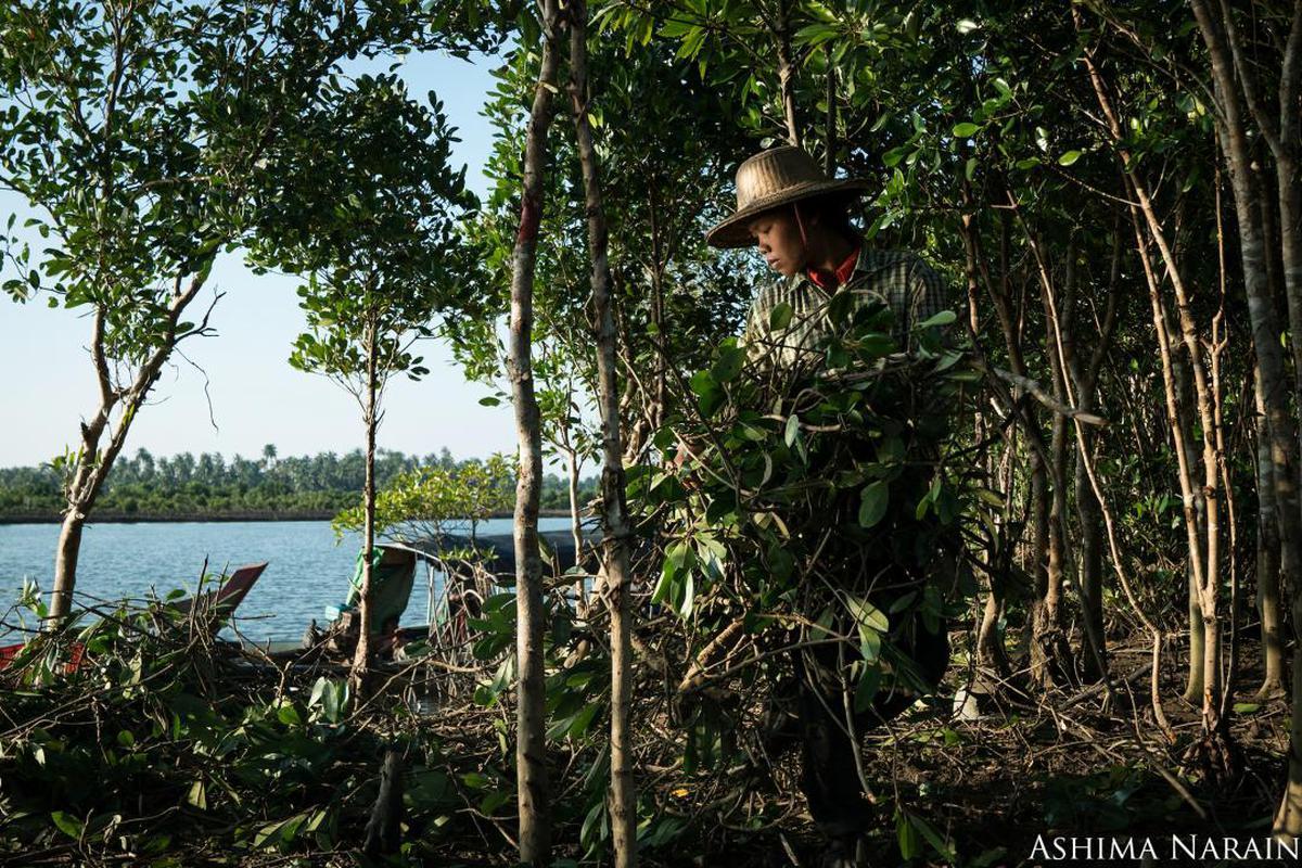 Image of Vegetation, Jungle, Tree, Natural environment, Nature reserve, Water etc.