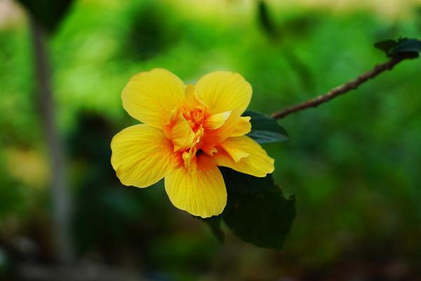 Image of Botany, Flowering plant, Plant, Yellow, Petal, Flower etc.