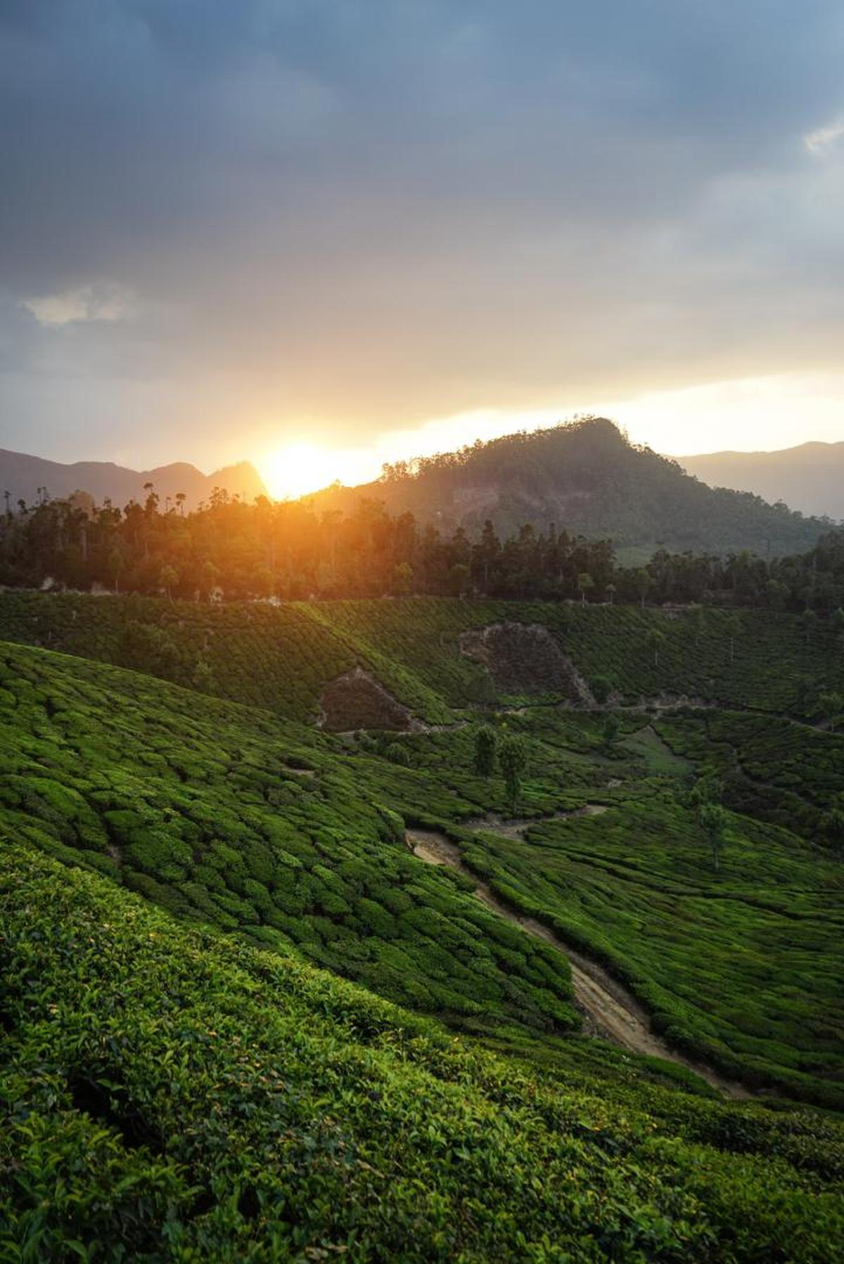 Image of Nature, Sky, Green, Highland, Morning, Hill station etc.