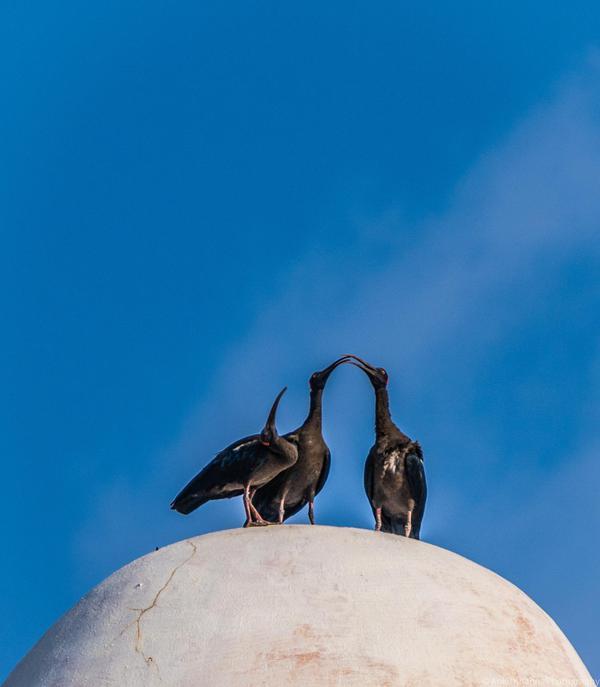 Image of Sky, Bird, Blue, Beak, Azure etc.